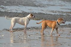 vacances de fvrier 020 (Jean-marc17340) Tags: vacances promenade plage hollidays ocan littoral charentemaritime chatelaillonplage vacancesdefvrier