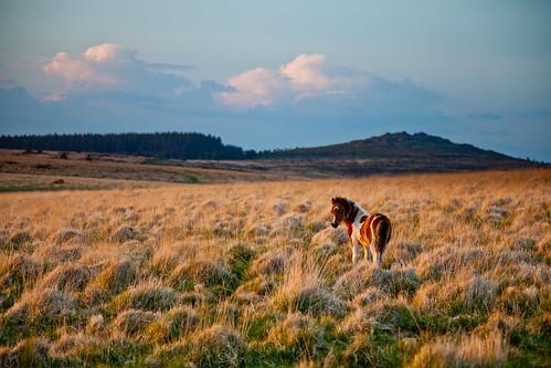 Dartmoor-274-2