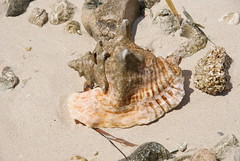 Treasures in the Sand (Neal D) Tags: beach seashell grandcayman eastend conchshell