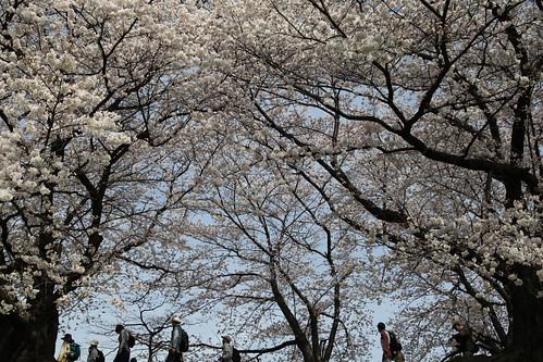 満開の春をいっぱい感じて~