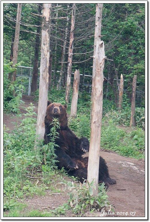 熊牧場 (20)