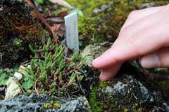 Botany of Cryptogams_9514 (Sterling College) Tags: ecology gardens nursery highlights botany morrisville cadysfalls sterlingcollege cryptogams beanabern michaeltessler