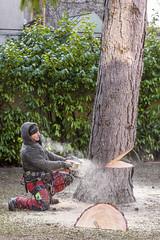 The Lumberjack 2 (dietmar-schwanitz) Tags: holzfäller lumberjack baum tree natur nature garten garden kiefer pine arbeit work arbeiter worker holz wood nikond750 nikonafsnikkor24120mmf40ged lightroom dietmarschwanitz