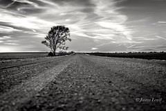 One (Justin Loyd Photography) Tags: canon 6d 24105 eos photography bnw bw monochrome rural gravel country greene february day happy flickr fun cold tree road solo one backwhite