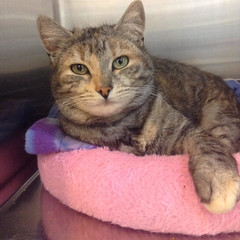 Shelley - 5 year old spayed female