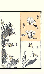 Left – thistle; Right top – apple and sand pear; Right bottom – violet (Japanese Flower and Bird Art) Tags: flower thistle cirsium asteraceae apple malus domestica rosaceae sand pear pyrus pyrifolia violet viola violaceae hokkei totoya ukiyo woodblock picture book japan japanese art readercollection