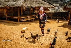 Slow Life -3 (Chula Amorn) Tags: asia sony thai thailand a7rii a7rm2 hilltribe hill