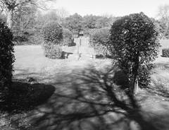 (Richie Rue) Tags: bronica film analogue analog mono monochrome blackandwhite spring march england uk yorkshire filmdev:recipe=11245 fujineopanacros100 film:brand=fuji film:name=fujineopanacros100 film:iso=100