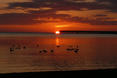 1712.JPG (cousin it2) Tags: birds sunrises ashland lakesuperior oredock elementsorganizer11