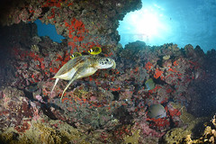 2013 04 METTRA OCEAN INDIEN 9991450