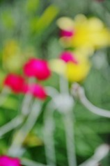 Zufallsbekanntschaft / Chance Encounter (Tinina67) Tags: summer plant abstract blur france flower june juni garden pflanzen blumen bloom tina chance garten unscharf encounter odc soring zufallsbekanntschaft tinina67