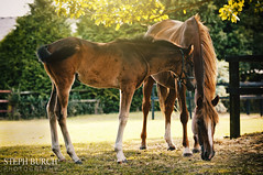 Mare and Foal (Colouredclouds123) Tags: england horses horse sun cute animals nikon little sunny pony 28 70200 equestrian equine d90