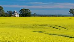 Gomersal Church (Valley Imagery) Tags: church field yellow barossa canola gomersal