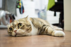 (Sherwin_andante) Tags: cat cookie olympus f18 貓 omd 17mm 2013 em5 201308