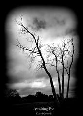 Awaiting Poe [Explored] (zendt66) Tags: trees bw white black tree clouds dark photo nikon ominous foreboding theme haunting melancholy weekly poe challenge burned edgarallanpoe d90 52weeks2013 zendt66
