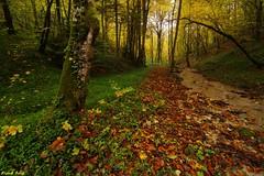 L'automne dans la Forêt du grand bois d'Amancey (francky25) Tags: la grand du franchecomté dans forêt bois doubs lautomne damancey