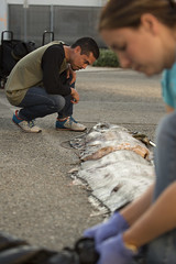 Curious (CSUF Photos) Tags: misty state cal fullerton csuf oarfish paigtran