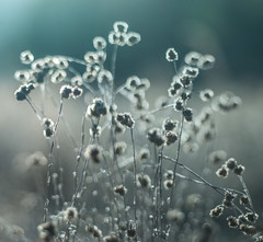 Weeds in the dry Lake Bed (BillChristian) Tags: flickrstock mamiyazd mamiya645afdii 80mmf19