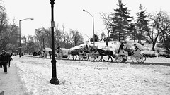 nikon d5100 winter photography: the new new york city mayor is banning horse-drawn carriages in central park (16:9 widescreen copy) ------- viewed 654x (norlandcruz74) Tags: park new york city nyc winter horse usa white snow ny black america us yahoo google firefox nikon carriage mozilla year central january cruz msn horsedrawn dslr aol bing carriages 2014 norland d5100