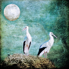 winds soft through the sighing trees (1crzqbn) Tags: color moonscape textures square windssoftthroughthesighingtrees 1crzqbn storks birds nature magicunicornmasterpiece model españa