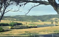 CLP14 and CLP16 head WL1, the Indian Pacific, towards Tarana. Main West, NSW, 9th December, 1996. (garratt3) Tags: aus film pentax rail railroad rural indianpacific standardgauge negative colournegative clpclass kodakroyal railway railways dieselpower australia nsw newsouthwales