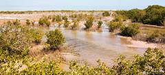 Mangroves at Al Khor (stewartl2010) Tags: middleeast mangroves qatar alkhor nikfilters purpleisland colorefexpro4