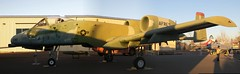 Jean (right), slightly distorted Republic A10A Warthog port nose, wing, engines, tail. DSC_0780 Panorama (wbaiv) Tags: california aerospace museum sacramento mcclellan afb usaf jet singleseat air force weapon warbird retired republic a10a thunderboltii thunderbolt warthog hog cas close support 30mm gattling cannon 1200 2400 rounds per minute httpswwwgooglecommaps386751575 1213921542 431mdata3m11e3 aviation airplane flying machine ca former mcclellen formerly united states fullsize airplanes planes machines exhibits nikon d40x 2014 aircraft plane outdoor vehicle