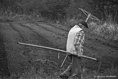Working Hard (Collect Time Not Things) Tags: life man nature field work village natura pole polen polonia acre praca scythe pologne kosa wie czowiek