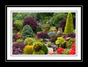 _Garden So Full of Colour (Audrey A Jackson) Tags: charity flowers trees colour nature garden amazing awesome azalea fundraising shrubs conifers walsall bamboos opengardens acers rhododendrun canon60d fourseasonsgarden