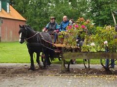 DSCF8458 (fuchs377) Tags: horse germany deutschland europa europe kutsche ostfriesland allemagne pferd duitsland niedersachsen pferdekutsche berumerfehn
