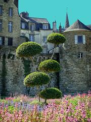 France Tree (Rockman of Zymurgy) Tags: summer france brittany breizh vannes breton 2013