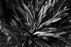 NIKON D7200 (conalog) Tags: monochrome photography nikon sp af tamron 90mm f25 52e d7200