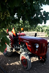 IMG_0378 (ACATCT) Tags: old espaa tractor spain traktor agosto toledo antiguo massey pistacho tembleque barreiros 2015 bustards perdices liebres avutardas ff30ds r350s