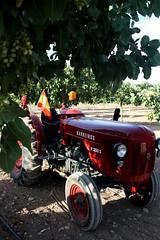 IMG_0378 (ACATCT) Tags: old españa tractor spain traktor agosto toledo antiguo massey pistacho tembleque barreiros 2015 bustards perdices liebres avutardas ff30ds r350s