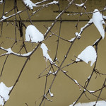 Snowy Branches - Branches enneigées thumbnail
