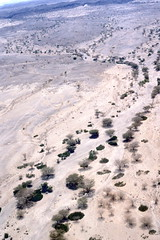 Dry river channel, near Lake Turkana, Sep 1980, Kenya img185 (Hart Walter) Tags: tourism coffee cattle rice tea goats sunflower sisal camels sugarcane deforestation desertification tef africanlanduse baobabdestruction