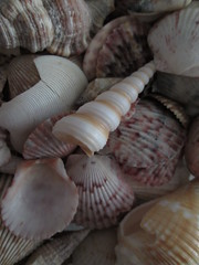 Focal swirls (727oceanview) Tags: sea shells collage seashells point coast interesting gulf florida swirls focal