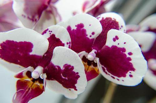 flower flowers plants plant