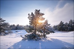 Winter landscape (Igor Goncharenko) Tags: christmas wood xmas morning travel blue winter light sky cloud sun white mountain snow cold tree ice nature beautiful beauty pine forest season landscape frozen cool frost december day view natural outdoor snowy background hill scenic halo sunny nobody scene panoramic fresh fir rime spruce tranquil slope coniferous wintry