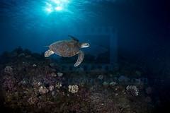2013 04 METTRA OCEAN INDIEN 1453