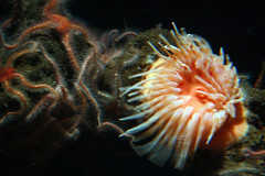 2009_11_14_Monterey Bay Aquarium_Cannery Row_us_015 (AZ_Michael) Tags: race aquarium bay monterey seahorse pacific bigsur run pointlobos halfmarathon canneryrow montereyfishhouse louielinguinis