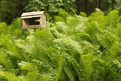 A bird feeder and ferns (Baking is my Zen) Tags: nature birdfeeder ferns carmenortiz canonrebelt1i bakingismyzen