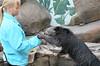 Binturong taken at Longleat Safari and Adventure Park - June 17, 2013 - Photo 63.jpg (atthezoouk) Tags: camera england wiltshire longleat zoos binturong asianbearcat cameralens animalphotos cutecreatures asiananimals efs55250mmf456is canoneosrebelt1i longleatsafariandadventurepark