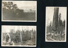 Beach and Tree, Washington, c1926 (Rob Ketcherside) Tags: beach water coast washington pacific logging oldgrowth