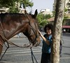 (Caitlin H. Faw) Tags: light shadow portrait horse woman color tree smile animal june canon hair landscape eos israel jerusalem backpack 5d petting jaffaroad yerushalayim markiii 2013 caitlinfaw caitlinfawphotography