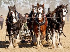 Anglų lietuvių žodynas. Žodis long horse reiškia ilgai arklys lietuviškai.