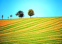Trees over the top (Tobi_2008) Tags: trees color germany landscape deutschland day saxony clear sachsen tobi landschaft farbe bäume allemagne germania diamondclassphotographer flickrdiamond bestcapturesaoi mygearandme