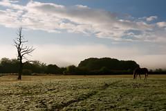 Udazkeneko argia (joxelu.) Tags: naturaleza arboles paisaje niebla navarra ultzama