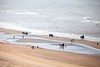 On the beach with horses (udo geisler) Tags: beach zandvoort absolutegoldenmasterpiece