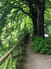 (Ruth Weld) Tags: road travel trees italy tree nature leaves leaf italia path railing perugia umbria gravel